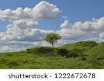 one solitary tree    Shutterstock . vector #1222672678