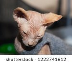 portrait of a beautiful puppy... | Shutterstock . vector #1222741612