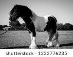 standing gypsy stallion  | Shutterstock . vector #1222776235