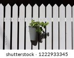 a green climbing plant in a pot ... | Shutterstock . vector #1222933345