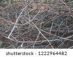 felled tree branches  felling ... | Shutterstock . vector #1222964482