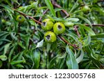 closeup of the fruits and...   Shutterstock . vector #1223005768