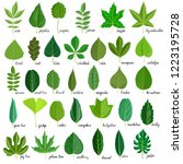 vector green leaves of... | Shutterstock .eps vector #1223195728
