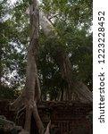 large trees growing in between... | Shutterstock . vector #1223228452