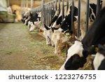 cattle in a barn eating grass | Shutterstock . vector #1223276755