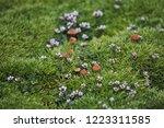 arctic moss  flowers and... | Shutterstock . vector #1223311585