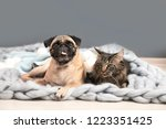 Stock photo cute cat and pug dog with blankets on floor at home cozy winter 1223351425
