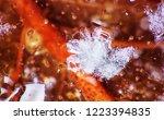 late autumn. frozen autumn... | Shutterstock . vector #1223394835