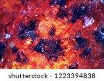 late autumn. frozen autumn... | Shutterstock . vector #1223394838