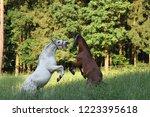 stallions horses playing | Shutterstock . vector #1223395618