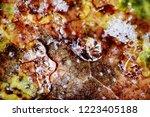 late autumn. frozen autumn... | Shutterstock . vector #1223405188