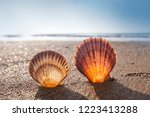 shells on the beach  sea... | Shutterstock . vector #1223413288
