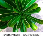 green leaves background | Shutterstock . vector #1223421832