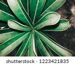 green leaves background | Shutterstock . vector #1223421835