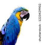 blue and gold  ara ararauna  or ... | Shutterstock . vector #1223429902