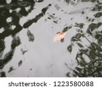 a leaf sinking into the water... | Shutterstock . vector #1223580088