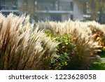 urban photography  a lawn is an ... | Shutterstock . vector #1223628058