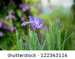 blue iris | Shutterstock . vector #122363116