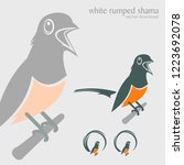 white rumped shama perched on a ... | Shutterstock .eps vector #1223692078
