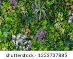 green leaves with vegetation on ... | Shutterstock . vector #1223737885