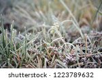 frost on the grass. the first... | Shutterstock . vector #1223789632