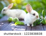 little rabbit and apple at the... | Shutterstock . vector #1223838838