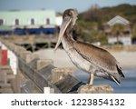 A Pelican Perches On A Pier...