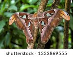 beautiful big butterfly  giant...   Shutterstock . vector #1223869555