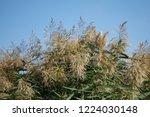 reeds on the river bank. marsh...   Shutterstock . vector #1224030148