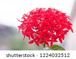 lovely flower red spike flower. ... | Shutterstock . vector #1224032512