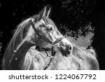 equine portrait all seasons | Shutterstock . vector #1224067792
