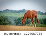 equine portrait all seasons | Shutterstock . vector #1224067798