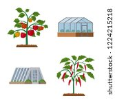 vector design of greenhouse and ... | Shutterstock .eps vector #1224215218