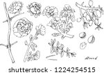 flowering twigs and nuts of... | Shutterstock .eps vector #1224254515