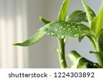 green bamboo plant with leaves... | Shutterstock . vector #1224303892