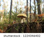 autumn in the forest | Shutterstock . vector #1224346402