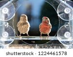 closeup front of two male ... | Shutterstock . vector #1224461578