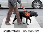dog trained to help blind...   Shutterstock . vector #1224502225