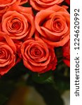 natural roses delicate red with ...   Shutterstock . vector #1224620992