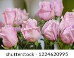 natural roses delicate violet...   Shutterstock . vector #1224620995