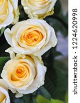 natural roses delicate yellow...   Shutterstock . vector #1224620998