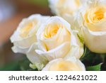 natural roses delicate yellow...   Shutterstock . vector #1224621022