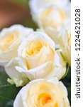 natural roses delicate yellow...   Shutterstock . vector #1224621028