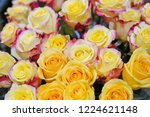 natural roses delicate yellow...   Shutterstock . vector #1224621148