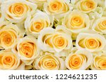 natural roses delicate yellow...   Shutterstock . vector #1224621235