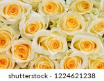 natural roses delicate yellow...   Shutterstock . vector #1224621238