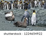 giant petrels roost on the edge ...   Shutterstock . vector #1224654922