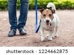 Stock photo friendly dog on leash at walkies exercises footwork with handler 1224662875