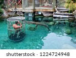 man and a pool with crocodiles. ... | Shutterstock . vector #1224724948