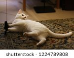 Stock photo white cat play with artificial mouse close up photo 1224789808